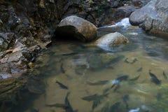 无危险游泳水的鱼浅滩  免版税库存照片