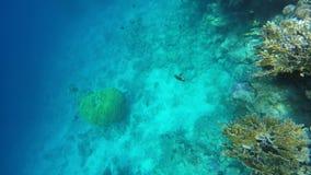 无危险漂浮的鱼浇灌海 影视素材