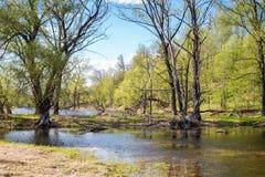 无名的湖在一个夏日 免版税库存图片