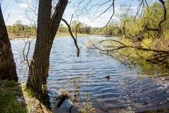 无名的湖在一个夏日 免版税库存照片