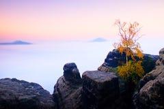无处海岛 残破的树在有薄雾的海洋 在美丽的山的满月夜 从重的乳脂状的雾增加的峰顶 免版税图库摄影