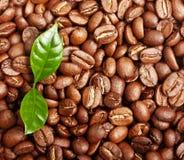 无奶咖啡豆,与叶子的五谷 免版税库存照片
