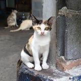 无家可归的三色小猫 免版税库存照片