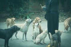 无家可归的从妇女的狗等待的食物 喂养狗的妇女 库存照片