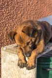无家可归的动物保护 免版税库存图片