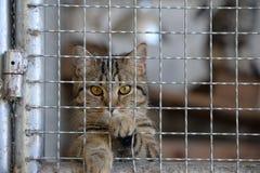 无家可归的动物系列 在看照相机的笼子的微小的平纹小猫通过酒吧为自由 免版税图库摄影
