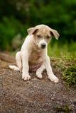 无家可归的小狗或炉渣狗本质上寻找收养的 库存图片