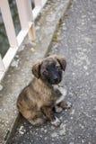 无家可归的小狗 免版税库存照片