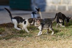 无家可归的小猫戏剧 免版税图库摄影