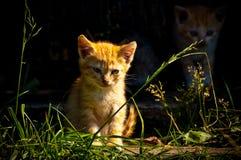 无家可归的小猫 免版税图库摄影