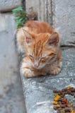 无家可归的小猫 库存照片