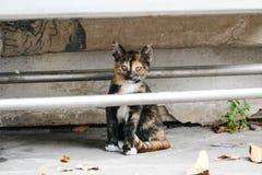 无家可归的小的小猫在一个寺庙居住在泰国 免版税图库摄影