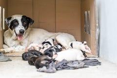 无家可归的母狗和他们的小狗和小狗睡眠在mot附近 免版税库存图片