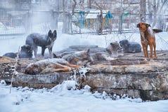 无家可归的狗在冬天 免版税库存照片
