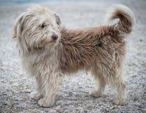 无家可归的狗罗尼的画象照片 库存照片