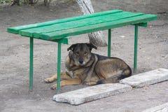 无家可归的狗说谎在长凳下 免版税库存图片