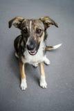 无家可归的狗画象 免版税图库摄影