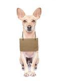 无家可归的狗 免版税库存图片