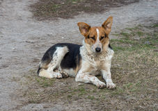 无家可归的狗 免版税库存照片