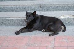 黑无家可归的狗 免版税库存照片