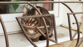 无家可归的猫坐与守卫栅格的窗台 影视素材