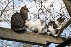 无家可归的猫温暖了互相挤作一团 免版税库存图片