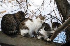 无家可归的猫温暖了互相挤作一团 库存图片