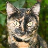 无家可归的猫画象 图库摄影