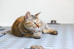 无家可归的猫 免版税图库摄影