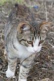 无家可归的猫 库存照片
