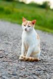 无家可归的红色猫坐温暖的柏油路 斜眼看一只离群的猫看照相机和 免版税库存图片
