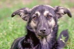 无家可归者狗杂种动物的画象 库存图片