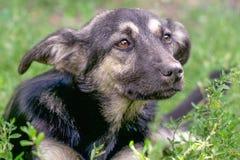 无家可归者狗杂种动物的画象 免版税库存图片