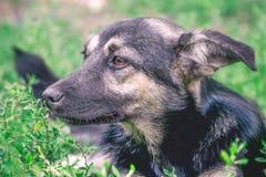 无家可归者狗杂种动物的画象 免版税库存照片
