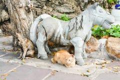 无家可归者猫在一个寺庙居住在泰国 库存照片