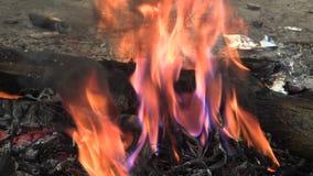 无家可归,灼烧的塑料电子缆绳垃圾火烟,大气污染和火染黑,有害的物质 股票视频