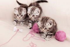 无忧无虑的小猫 免版税库存图片