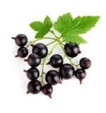 无核小葡萄干新鲜水果绿色叶子 图库摄影