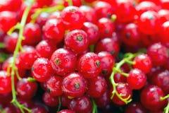 无核小葡萄干有机莓果 图库摄影