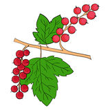 无核小葡萄干植物果子 免版税库存图片