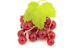 无核小葡萄干红色成熟 图库摄影