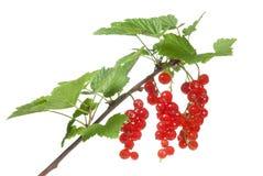 无核小葡萄干红色白色 库存图片