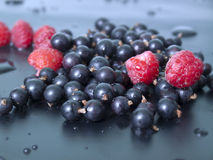 无核小葡萄干莓 库存照片