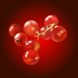 无核小葡萄干 向量例证