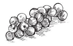 无核小葡萄干 免版税库存照片
