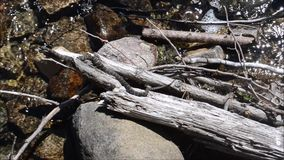无毒野生蛇在Tobermory附近的水,布鲁斯半岛安大略加拿大中 影视素材