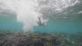 无法认出的人潜航在水面下在珊瑚礁 热带假期概念 股票视频
