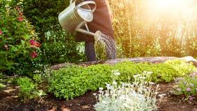 无法认出的使用喷壶的妇女浇灌的花床 从事园艺的爱好概念 在葡萄酒样式的花Garden.vector花卉背景 免版税图库摄影