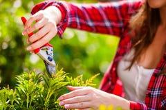无法认出的花匠修剪一点树,绿色晴朗的自然 免版税库存图片