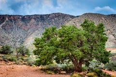 无生命大城市沙漠画廊的横向更多我的其他全景早先日落结构树差异工作 图库摄影